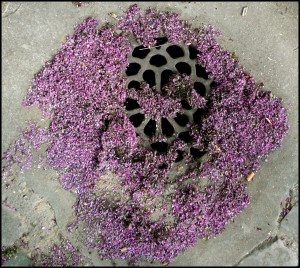 plaque à fleurs roses